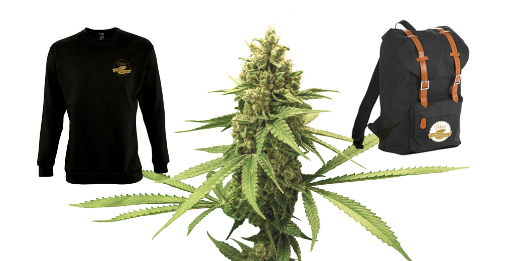Compra semillas marihuana online