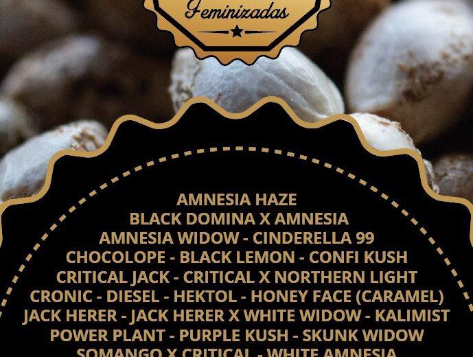 Semillas Marihuana  Feminizadas y Autoflorecientes